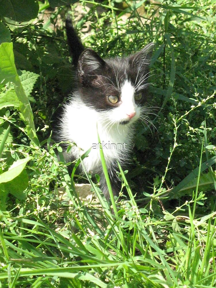 Black & white Felix Kitten by atkinnt