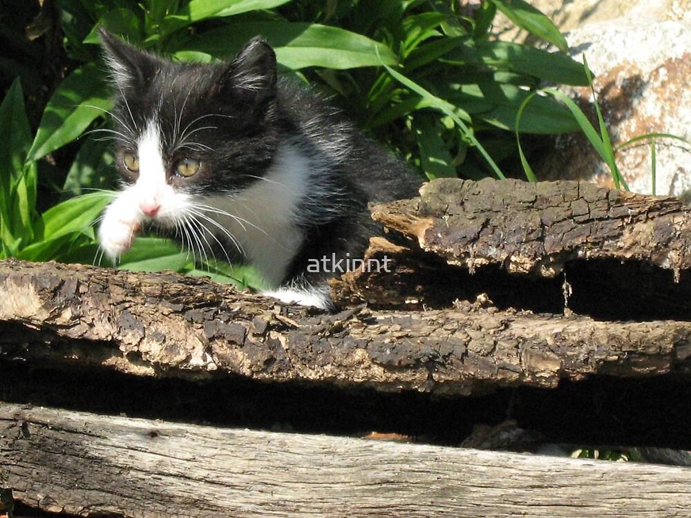 Felix Black & White Kitten by atkinnt