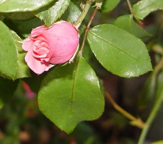 ready to blossom by scarlettheartt