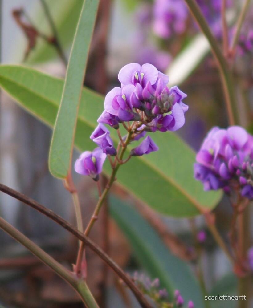 delicate in purple by scarlettheartt