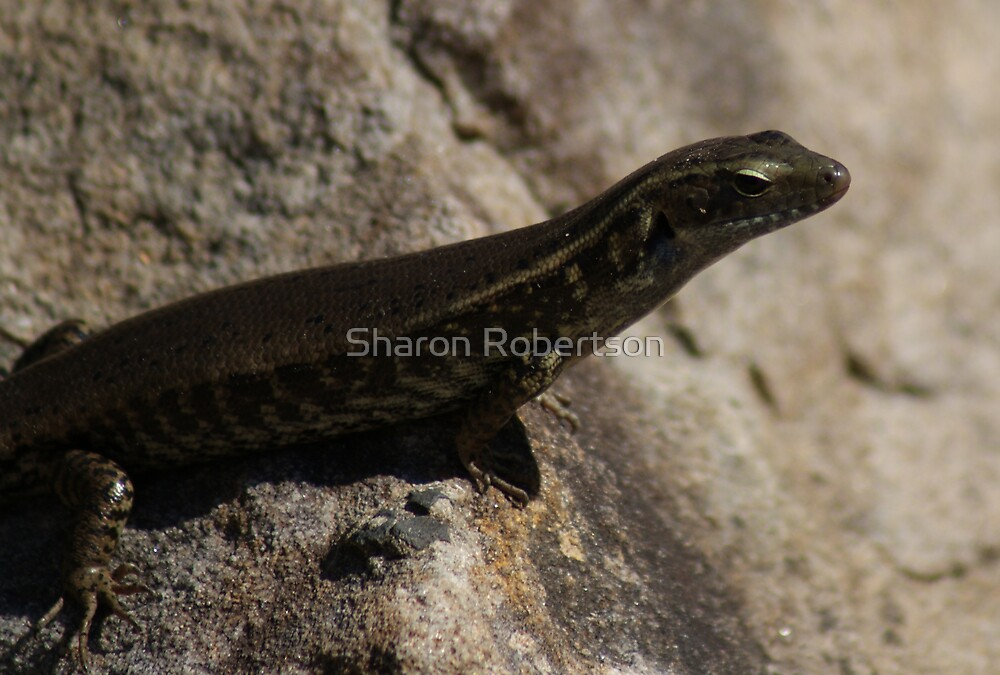 Skink You! by Sharon Robertson
