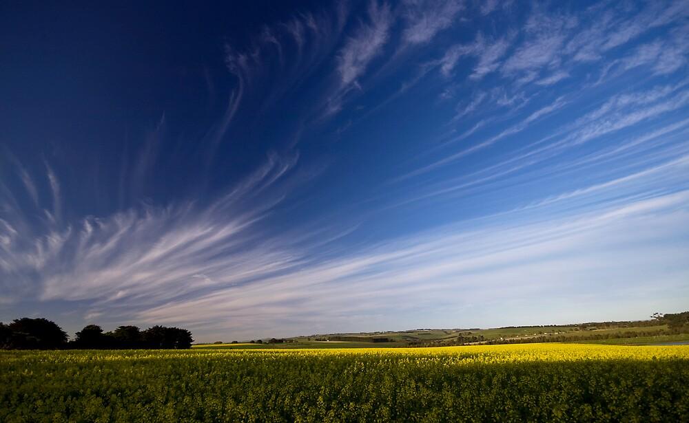 canola field_landscape by Akif  Kaynak