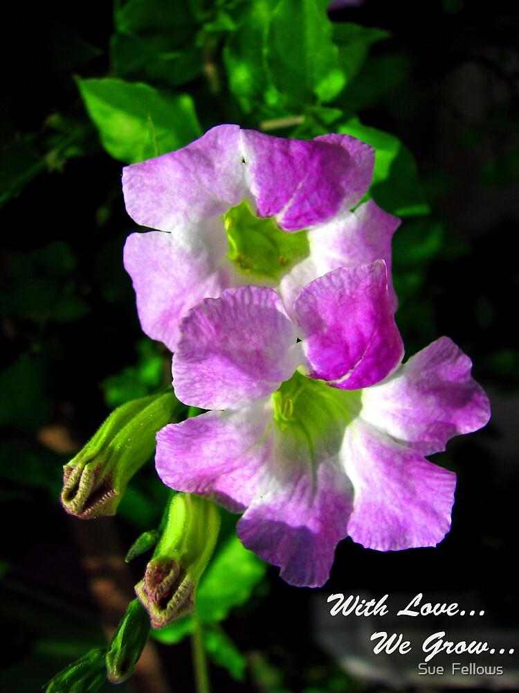 """Flower Power"" by Sue  Fellows"