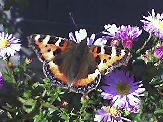 butterfly by keet