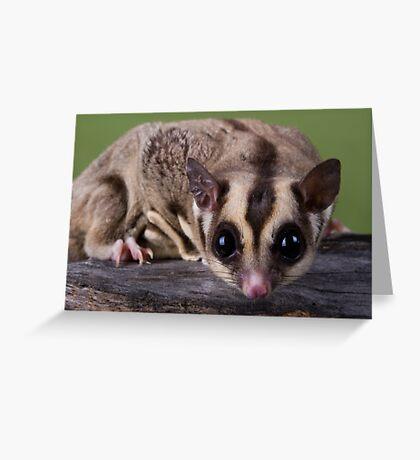 Nosy Glider Greeting Card