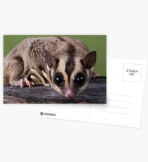 Nosy Glider Postcards