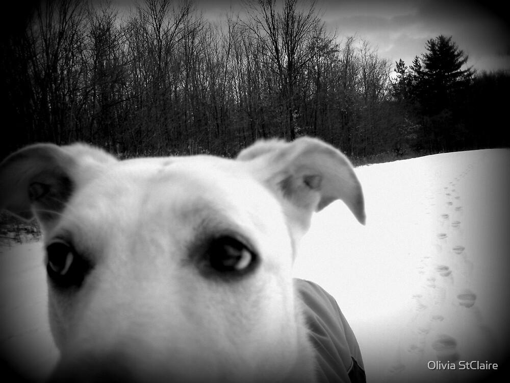 Walk the Dog by O. Joy
