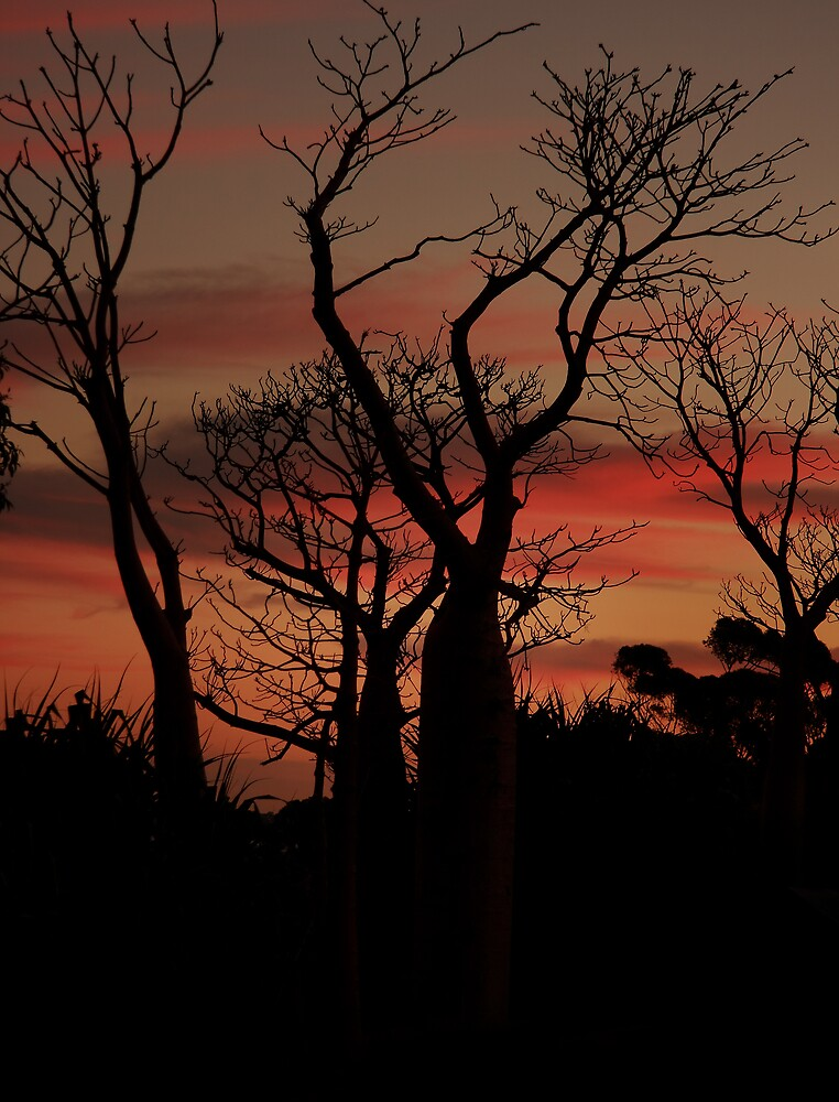 Boabs at sunset by aaronkenn