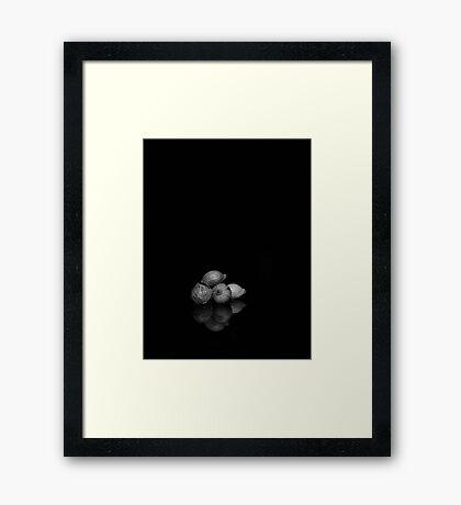 Well Seeded B&W Framed Print