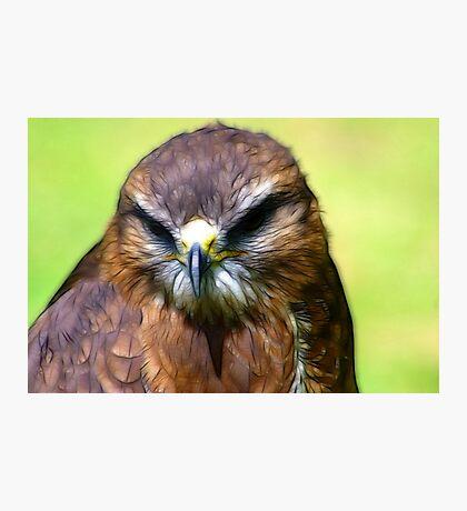 Fractual Falcon Photographic Print