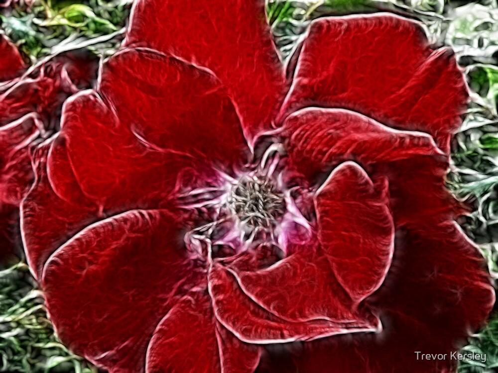 Fabulous Flower by Trevor Kersley