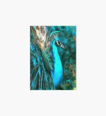 Peacock Plumage Art Board