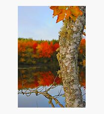 Beauty and the Birch Photographic Print