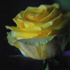 Madam Rose by Lozzar Flowers & Art