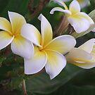 Flowers from Lolabud by Lolabud