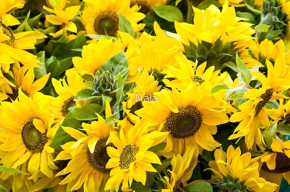 A sunny flower day  by Nala