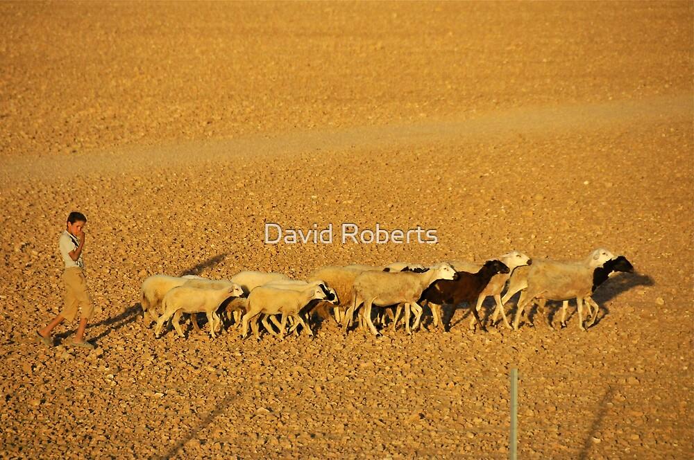 Tending his flock by David Roberts