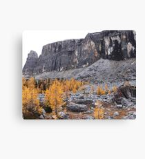 Larches of Tower Lake Canvas Print