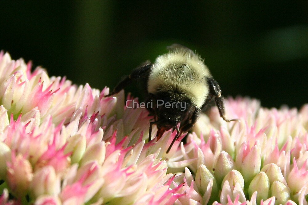 Bee & Bloom by Cheri Perry