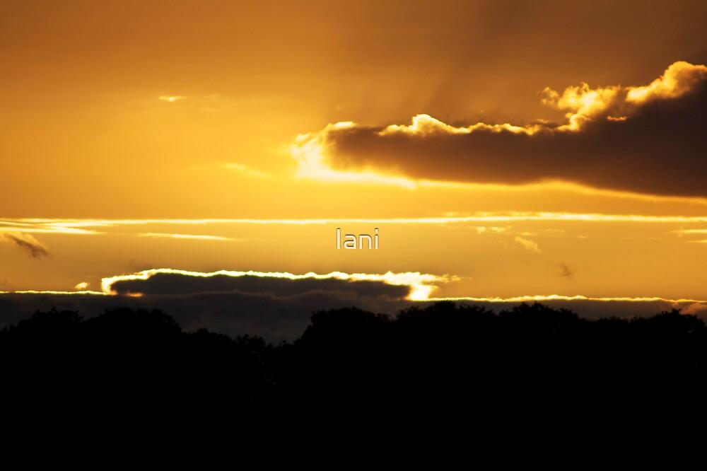 Yellow Sunset by Iani