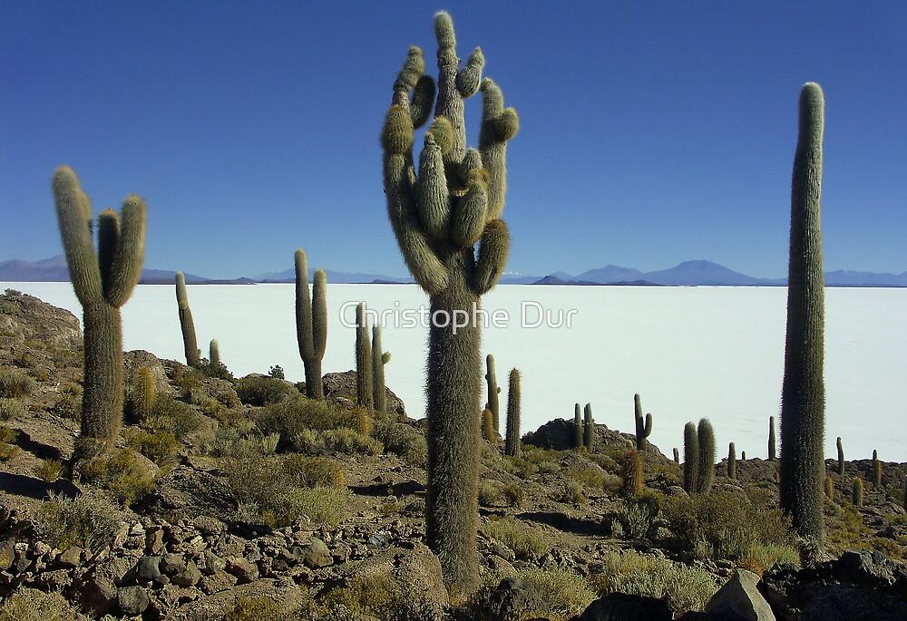 Isla del pescado - Bolivia by Christophe Dur