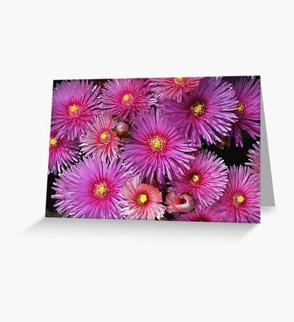 Beautiful Pink Pigface Flowers Greeting Card