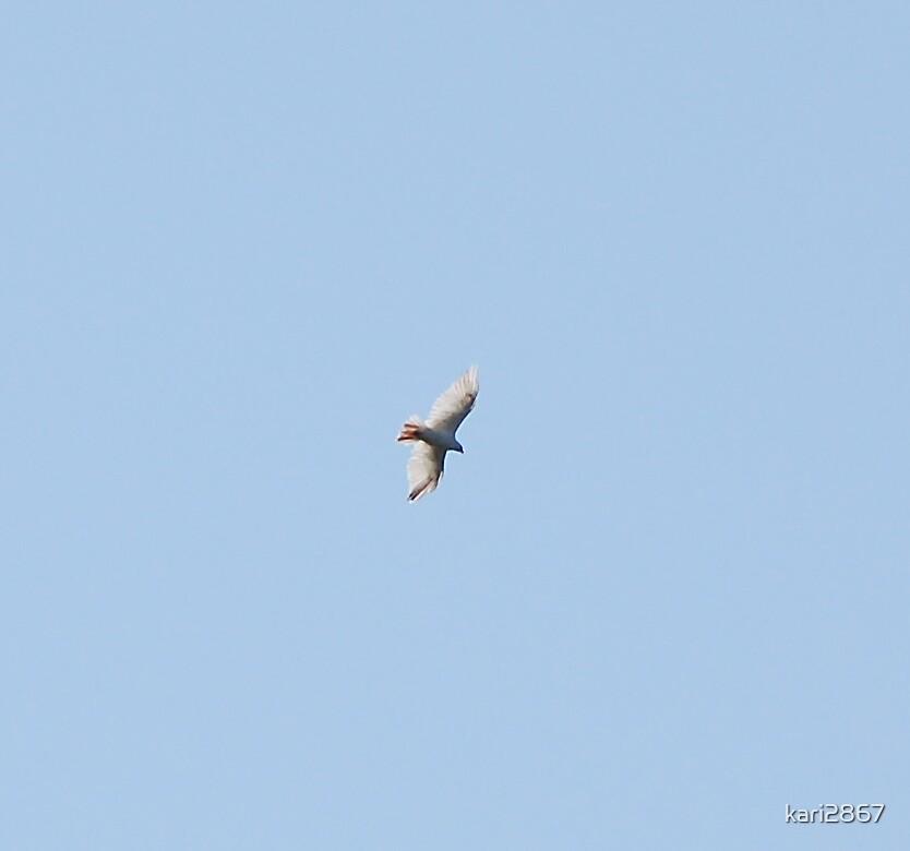 flying high by kari2867