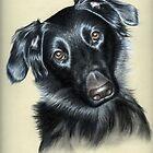 Dogs Eyes III by Nicole Zeug