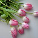Fallen Tulips by Jan  Wall