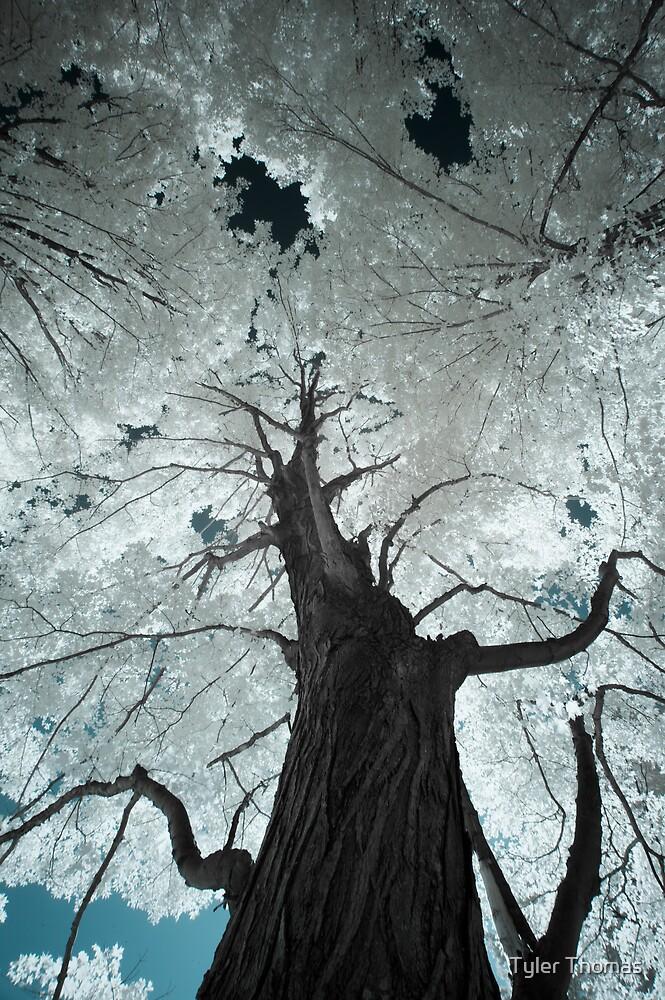 Tree by Tyler Thomas