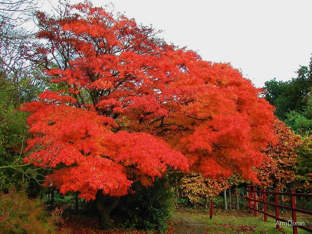 Maple Tree by AnnDixon