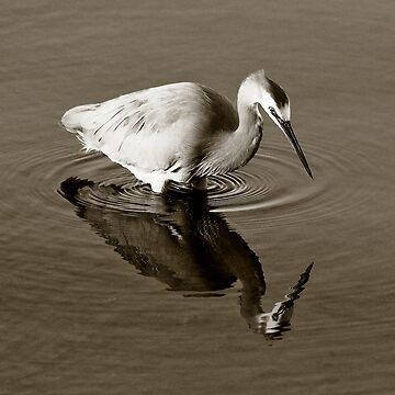 Grey Egret Stalking Fish by Ohlordi