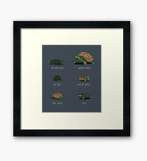 Know Your Turtles Framed Print