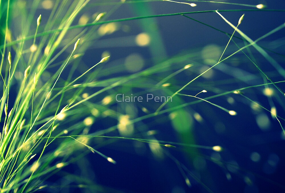 Greengrass by Claire Penn