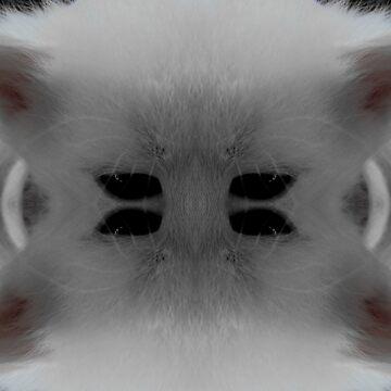 cat by Switlanar