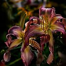 """Northwind Dancer"" Daylily by Michael Cummings"