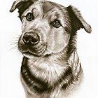Dogs Eyes - Hundeblick by Nicole Zeug
