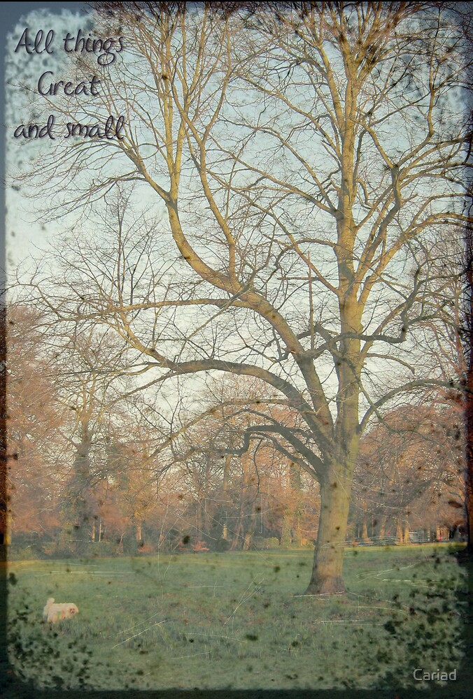 All Things Great & Small by Cariad