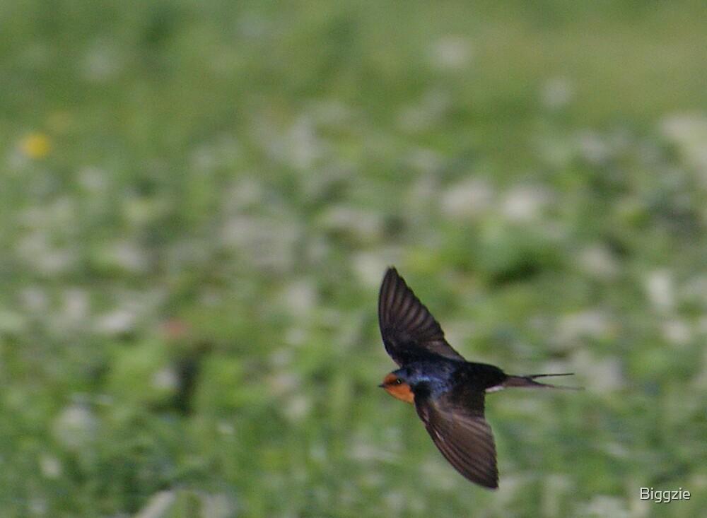 Fly By 2 by Biggzie