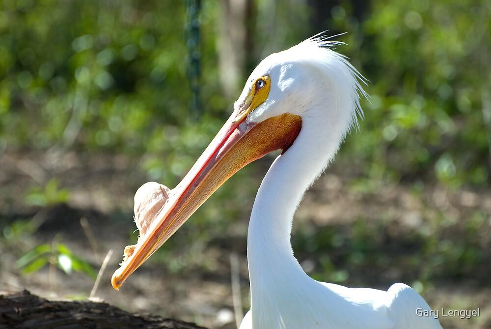 Pelican by Gary Lengyel