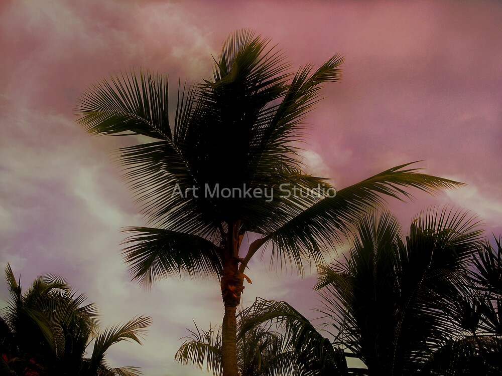 Palm Trees at Sunset by Dan Perez