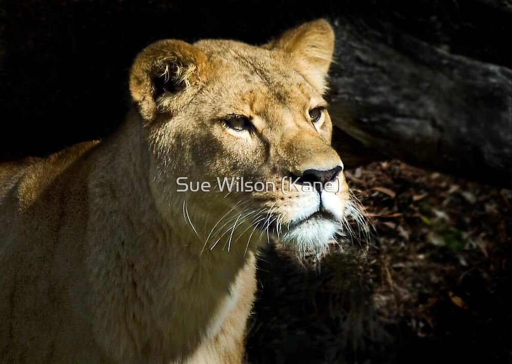 Watchful eye by Sue Wilson (Kane)