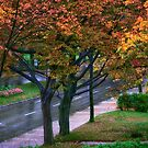 After the Rain in Autumn - Quebec City - La Belle Capitale by Yannik Hay