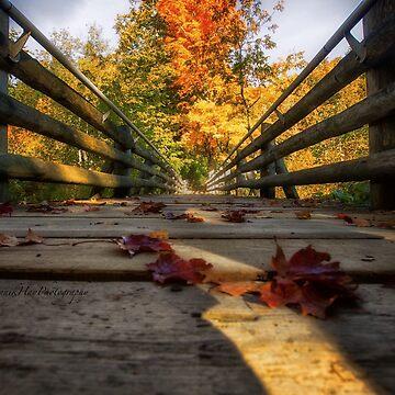 Bridges Instead of Walls by Photograph2u
