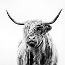 portrait of a highland cow (landscape format) by Dorit Fuhg