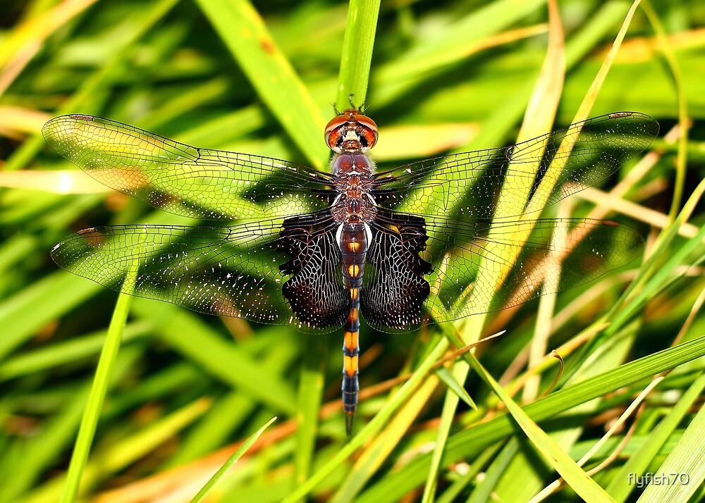 Dragon Lady by flyfish70
