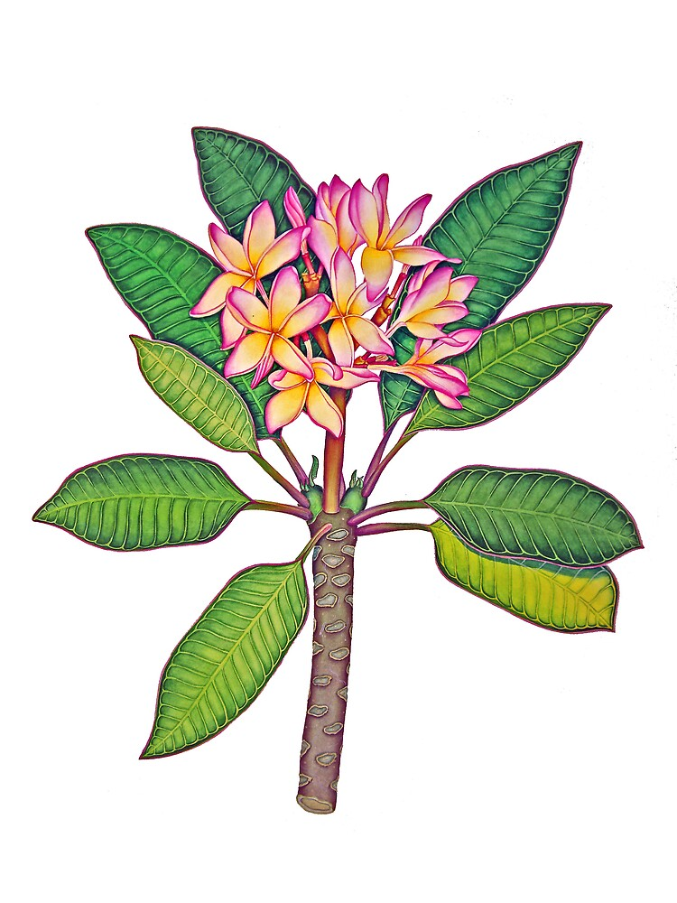 Frangipani Botanical by joeyartist