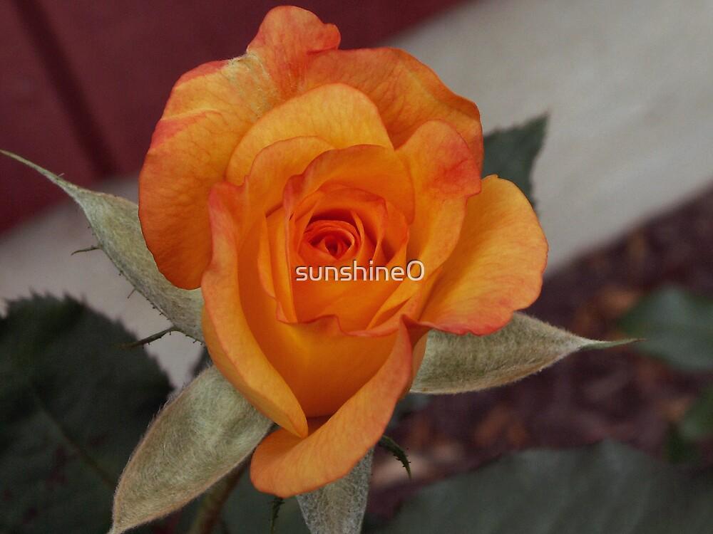 Tiny orange rose by sunshine0