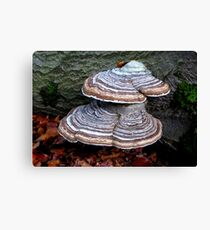 At the side of the path Canvas Print