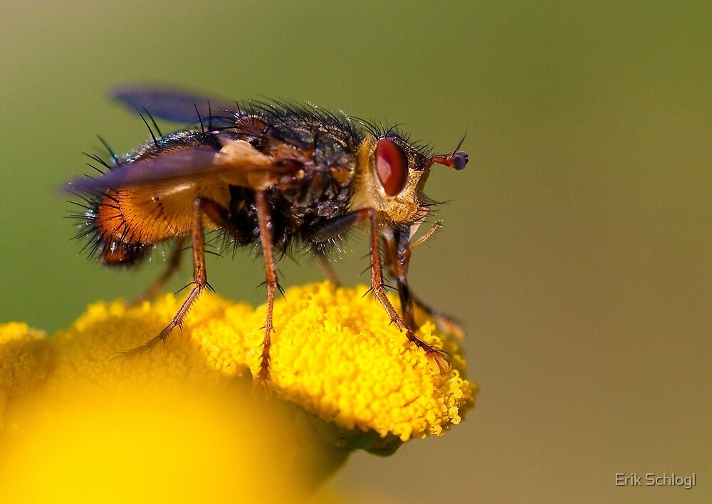 Fly by Erik Schlogl